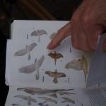 Vogelkunde mit Paul 3