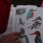 Vogelkunde mit Paul 4